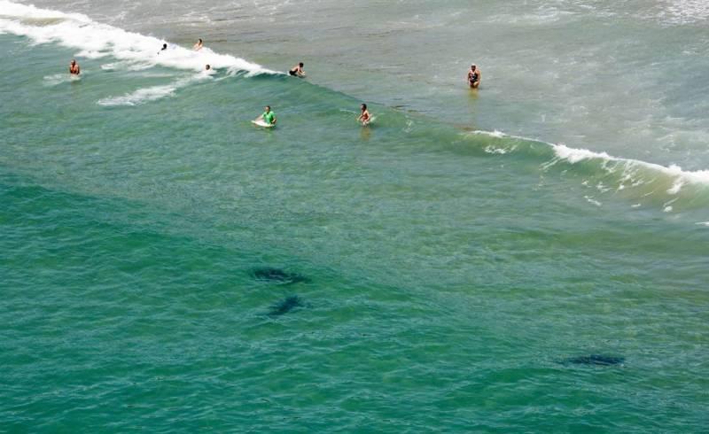 میکسکیو کے سمندر میں  شارک مچھلی کو قریب سے دیکھنے آئے لوگوں کو اس وقت خوف کا سامنا کرنا پڑا