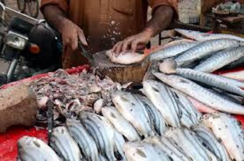 یخ بستہ ہواوں کی شدت سے محفوظ رہنے شہریوں نے مچھلی کا استعمال بڑھا دیا ہے