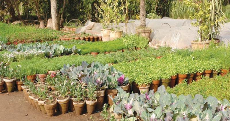 کراچی میں قیمتی پھولوں اور پودوں کا دشمن منظرعام پر آ گیا۔