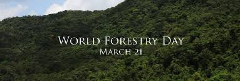 درخت ماحولیاتی آلودگی کم کرنے کا قدرتی ذریعہ ہیں پاکستان سمیت دنیا بھر میں جنگلات کا دن آج منایا جا رہا ہے