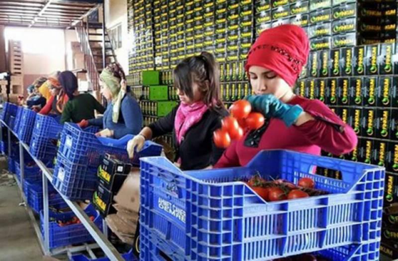 ترکی نے رواں سال 20 ہزار ٹن تازہ سبزیاں اور پھل برآمد کرنے کا ہدف مقررکردیا۔