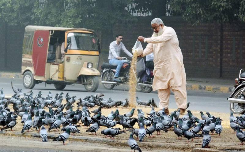 صوبائی دارالحکومت لاہور کے مختلف علاقوں میں کبوتر چوک بن گئے