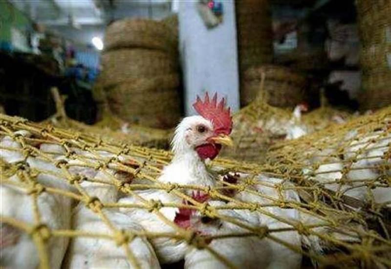 گوشت پر قانونی پابندی، پولٹری کی صنعت ریکارڈ منافع کمانے لگی۔