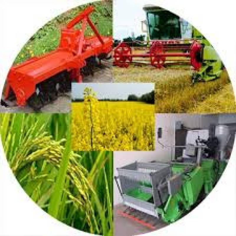 کپاس کی فصل کو سب سے زیادہ خطرہ جڑی بوٹیوں سے ہے۔ جڑی بوٹیاں فصل میں 45 فیصد تک کمی کا باعث بنتی ہیں: محکمہ زراعت پنجاب