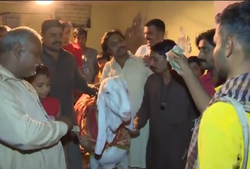 گوجرانوالہ میں دراز قد ،خو بصورت 230 کلو وز نی پہلوان بکرا لوگوں کی توجہ کا مرکز