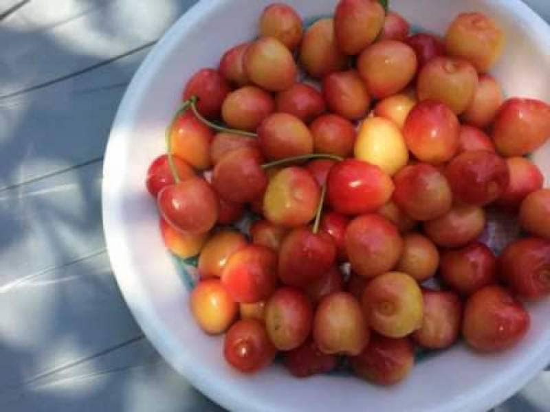 چترال کی بہادر گھریلو خواتین ان ٹماٹروں کو بیچ کر بچوں کو تعلیم دلاتی ہیں اور گھر بار چلاتی ہیں