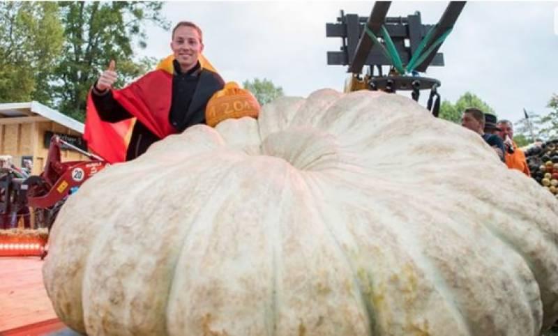 بیلجیم کے کسان نے ایک ہزار کلو وزنی کدو اگا کر مقابلہ جیت لیا