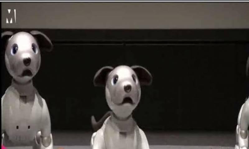 کتے سے مشابہت رکھتا ہوا ایک جدید روبوٹ تیار