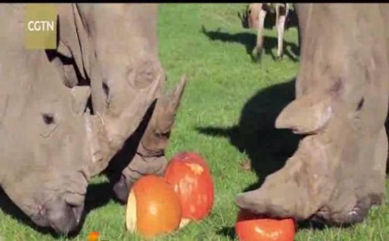 انگلینڈ میں ہیلووین کے موقع پر گینڈوں اور جنگلی گلہریوں کی تو عید ہی ہوگئی