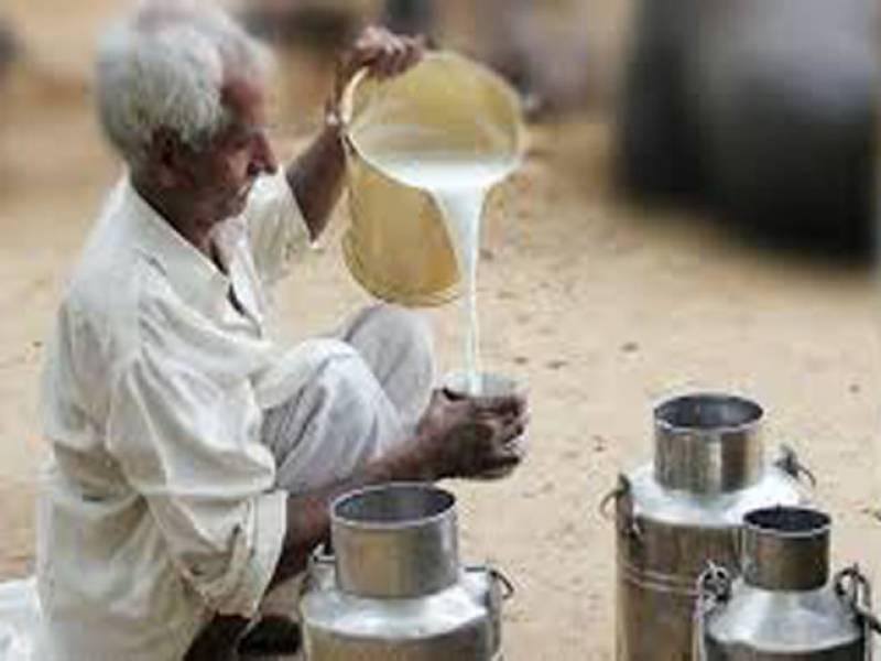 برطانوی ماہرین نے صحتمند زندگی کےلئے خالص دودھ کا استعمال لازمی قرار دے دیا۔