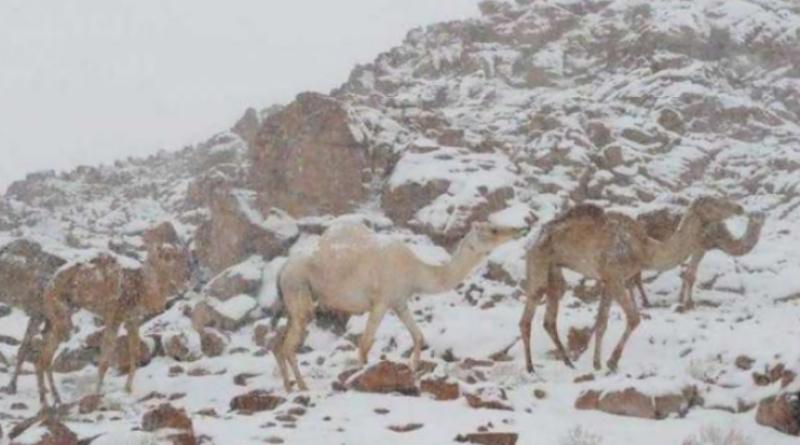 سعودی شہر الشفا کے پہاڑوں پرژالہ باری ،سحر انگیز مناظر