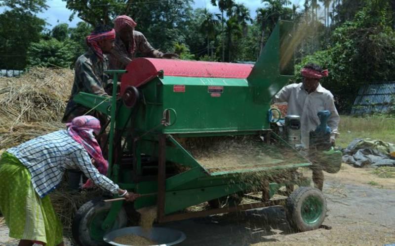 شمال مشرقی ریاست تری پورا میں کسان چاول کی فصل کی کٹائی میں مصروف