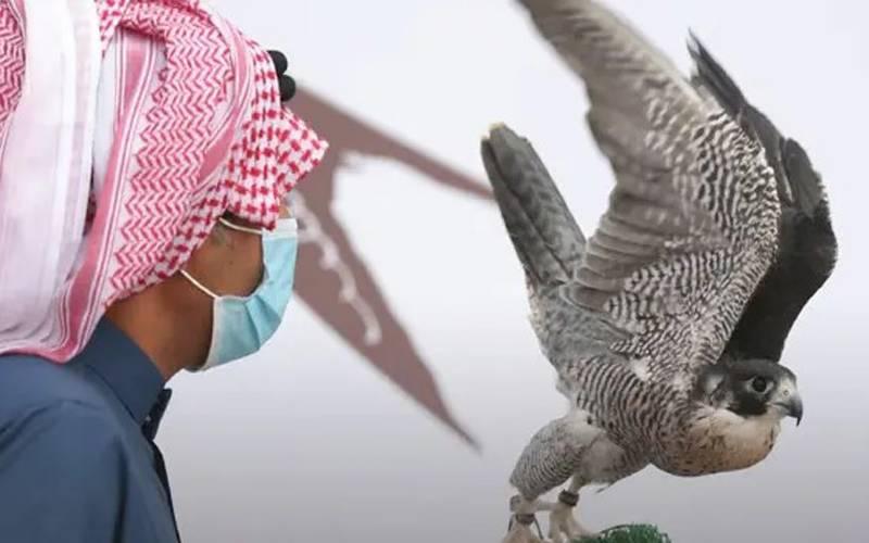 سعودی عرب میں فالکن پروڈکشن فارمز کی بین الاقوامی نیلامی کا پہلا ایڈیشن شروع