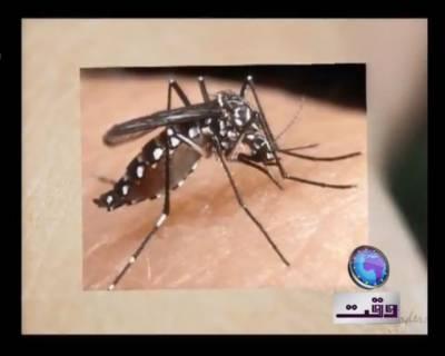 Dengue in Punjab 23 August 2011