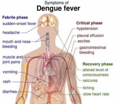 لاہور میں ڈینگی بخار نے مزید چار گھروں میں صف ماتم بچھا دی جس سے پنجاب میں مرنےوالوں کی تعداد ایک سو پندرہ تک جا پہنچی