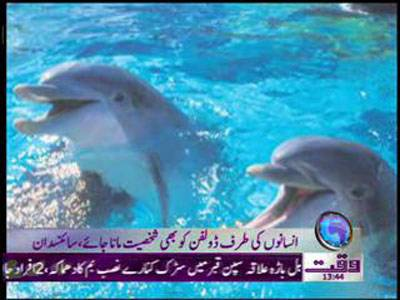 Scientist Wants Dolphine Call as Human Personality News Package 22 February 2012