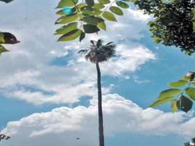 محکمہ موسمیات کے مطابق آئندہ چوبیس گھنٹوں کے دوران ملک کے اکثر علاقوں میں موسم گرم اور خشک رہنے کا امکان ہے۔