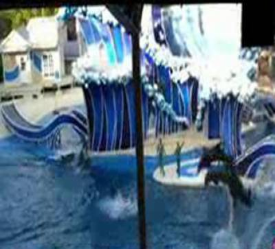 Florida's Sea Theme Park Becomes Centre Of Attention For Tourists News Package 27 June 2012