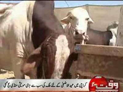 کراچی میں عید الاضحٰی کے لئے ملک کی سب سے بڑی مویشی منڈی سج گئی