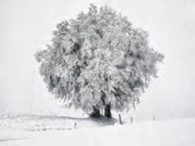 آئندہ چوبیس گھنٹوں میں ملک کےاکثرعلاقوں میں موسم سرد اورخشک رہےگا تاہم راولپنڈی،اسلام آباد،پشاور،مالاکنڈ ،ہزارہ ڈویژن،کشمیراورگلگت بلتستان میں بارش اورپہاڑوں پربرف باری کا امکان ہے.