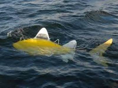 امریکی بحریہ نے اپنے نئے سپاہی متعارف کرا دیئےجو انسان نہیں بلکہ ٹونامچھلی کی شکل کے روبوٹ جاسوس ہیں
