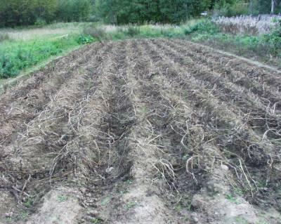 روس میں ٹڈیوں نے فصلیں تباہ کردیں، علاقے میں ایمرجنسی نافذ