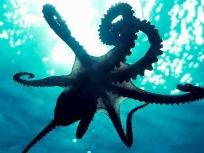 آکٹوپس اپنی خصوصیات کی وجہ سے اجنبی مخلوق لگتے ہیں: سائنس دان