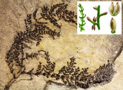 دنیا کے قدیم ترین پھولدار پودے کی دریافت