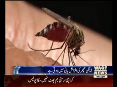 Dengue Mosquito Breeding Through Water