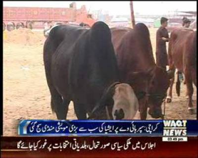Cattle market To Be Set up At Super Highway