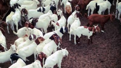 بھارت میں گائے زبح کرنا تو جرم تھا ہی لیکن اب بکرے کے گوشت کی فروخت پر بھی پابندی لگا دی