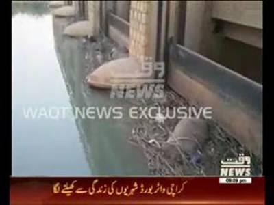 Birds Dead Bodies Found From Keenjhar Lake Karachi