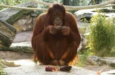 رومانیہ میں تو ایک بندر نے لڑکی سے موبائل فون چھین کر اس پر فیس بک استعمال کر کے نہ صرف لوگوں کو مسکرانے بلکہ حیران ہونے پر بھی مجبور کردیا۔