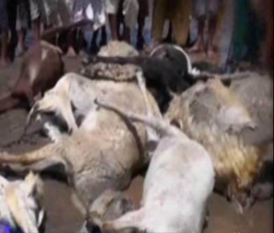زمیندارنےانسانیت کی دھجیاں بکھیردیں،کھیتوں میں بکریاں لانےپرمحنت کش کوبدترین تشددکانشانہ بنایا