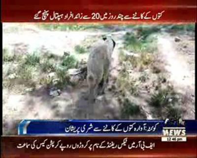 Stray Dog killing campaign in Quetta