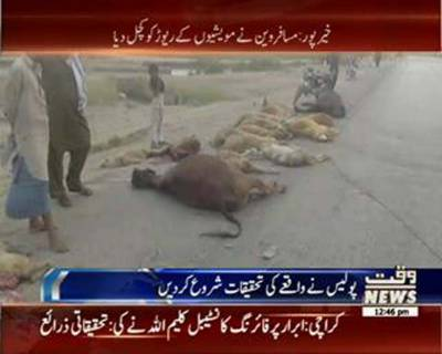 خیرپورمیں مسافر وین نے 60 مویشیوں کے ریوڑ کو کچل دیا