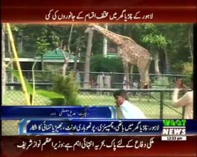 لاہور کے چڑیا گھر میں برسا برس سے کئی جانور تنہائی شکار ہیں اور اپنے ساتھی کے منتظر ہی