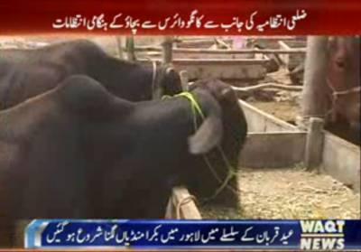 لاہور میں عید قربان کے موقع پر جانوروں کی فروخت کے لئے سات مقامات پر مویشی منڈیاں قائم کردی گئیں