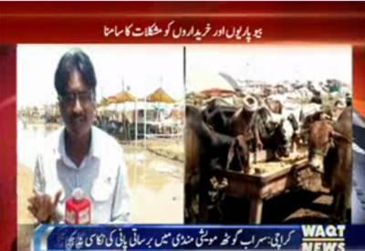 سیالکوٹ میں بھی مویشی منڈی سج گئی۔ قربانی کے جانوروں کی خریداری کیلئے شہریوں نے مویشی منڈی کی رخ کرلیا