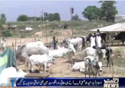 گوجرانوالہ میں عید الضحی کے قریب آتے ہی مو یشی منڈیاں سج گئیں