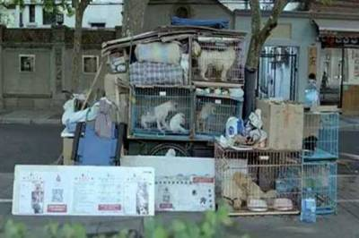 آوارہ کتے چینی شہری کو سڑکوں پر لے آئے