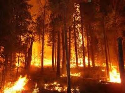 امریکی ریاست نیواڈا میں لگی جنگلاتی آگ تیزی سے پھیلنے لگی