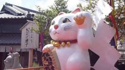 جاپان میں بلیوں کا روپ دھارنے کے حوالے سے منفرد اور دلچسپ فیسٹیول کا انعقاد کیا گیا،
