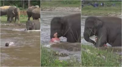 تھائی لینڈ میں ننھے ہاتھی نے ڈوبتے شخص کو بچالیا