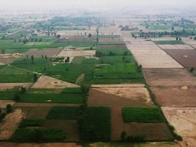 اسلامی ممالک کی تنظیم کے رکن ممالک کا زرعی رقبہ دنیا بھر کے زرعی رقبہ کے29 فیصد کے مساوی ہے۔