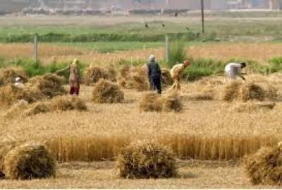 فصل ربیع کیلئے 25سو ملین روپے کے قرضے جاری کرینگے:اقبال چنڑ
