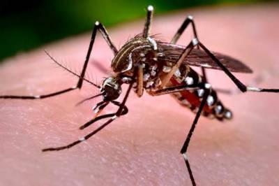 کراچی کےعلاقےملیرسعود آباد میں پرسراربیماری ڈاکٹرکےمطابق یہ وائرل انفیکشن نہیں چکن گونیا وائرس ہے