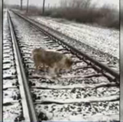 انسانوں کی دوستی کی مثالیں تو آپ نے بہت سنی ہونگی لیکن یوکرین میں ایک کتے نے وفاداری کی حد کردی