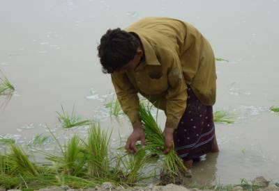 یورپی یونین نے سندھ کے خشک سالی سے متاثرہ علاقوں میں عالمی ادارہ خوراک کے زیر اہتمام پروگرام کےلئے خطیر فنڈز فراہم کردئیے