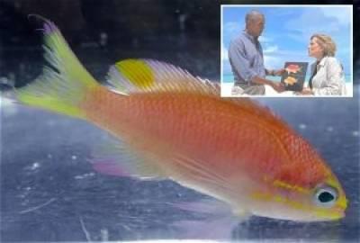 مچھلی کو''اوباما'' کا نام دیدیا گیا